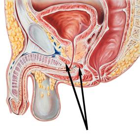 fortalecer el músculo PC para mantener la ereccion