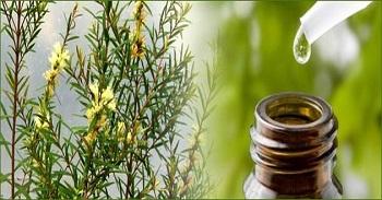 como curar el herpes genital masculino con aceite del arbol del té